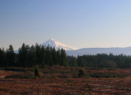 139 Acre Tree Farm For Sale In Oregon City Oregon