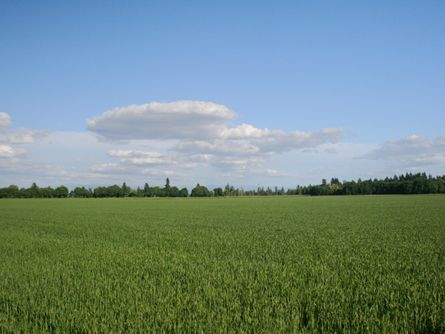 78 Acres Willamette Valley Farmland