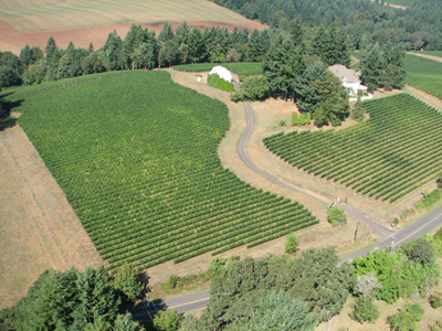 Dundee Hills Oregon Vineyard
