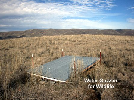 Water Guzzler for Wildlife