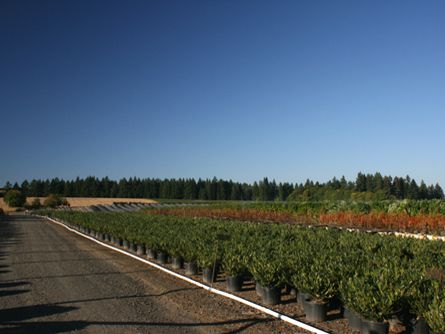 Productive Willamette Valley Oregon Irrigated Farm