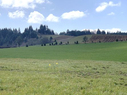In the Chehalem Mountain Winegrowers AVA