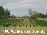 100 Acre Marion County Nursery for Sale