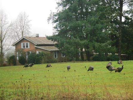 5 Acres with Home in McMinnville, Oregon for sale