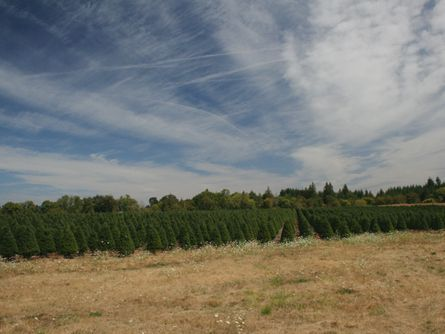 Short Term Lease on Christmas Tree Land
