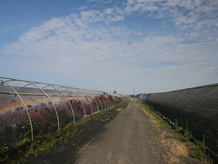 Rows of Greenhouses on Schefflin Farm