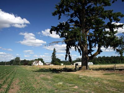 Beautiful Willamette Valley Farm near Stayton, Oregon