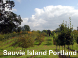 Sauvie Island Nursery with Irrigation for sale