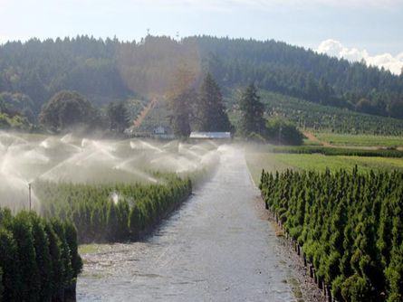 Water Rights from Irrigation Well and Tualatin Valley Irrigation District