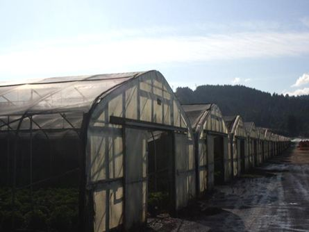 Approximately 30 large Greenhouses