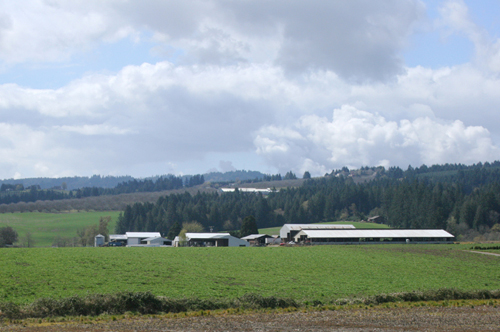 Washington County Oregon Irrigated Farm