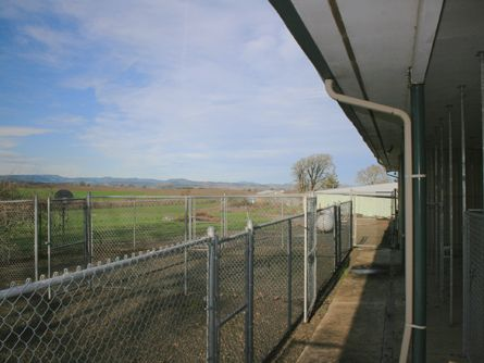 Fenced yard and kennels previously used for bird dogs