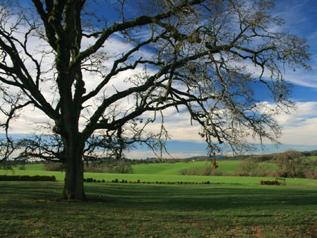 Picturesque and Productive Willamette Valley Land